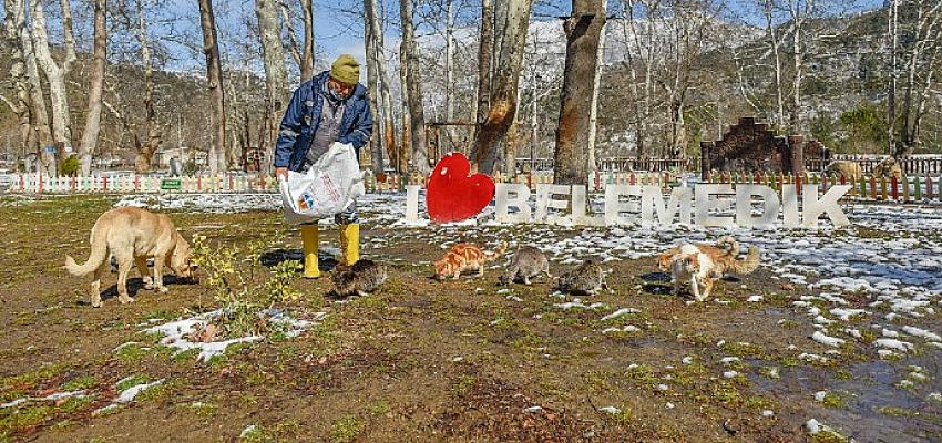 Adana'da Karla Mücadele Ediyor, Sokak Canlılarını Besliyor
