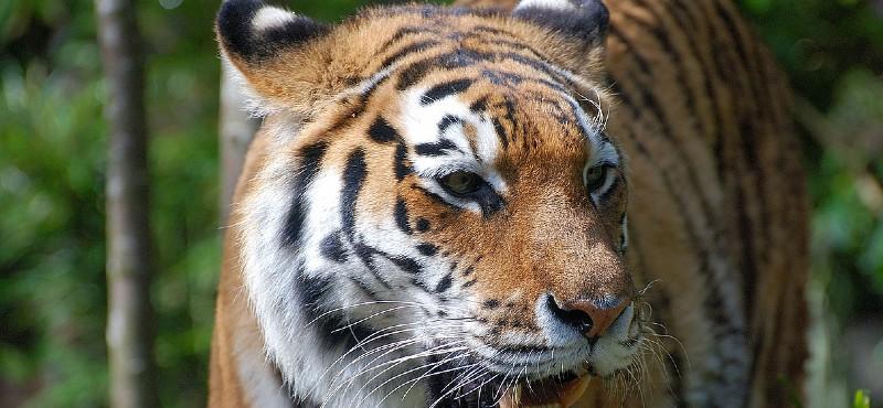 Büyük Kediler Şubat Ayı Boyunca National Geographic NOW'da