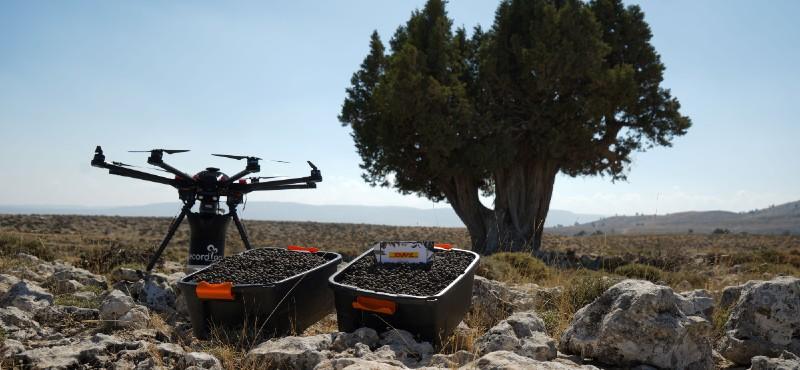 DHL Ormanı için son tohumlar drone'lardan atıldı