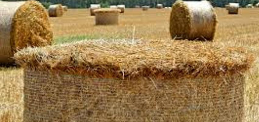 PASHA Bank'tan tarıma destek